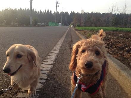 トワ散歩1