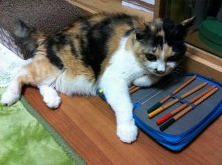 色鉛筆が好きな猫