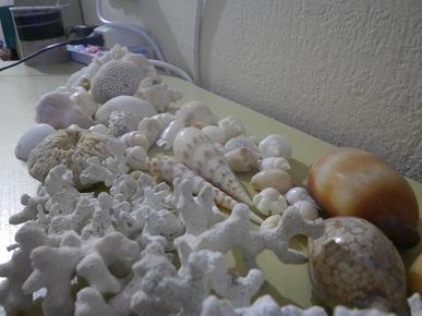 サンゴと貝