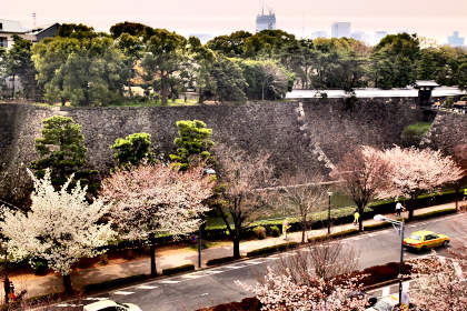 a桜 007