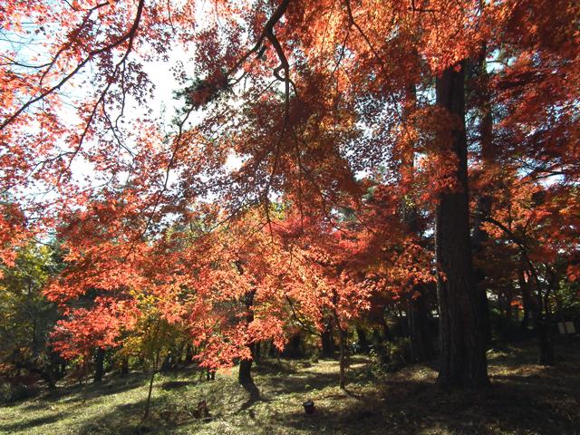 長瀞 月の石もみじ公園の紅葉(2)