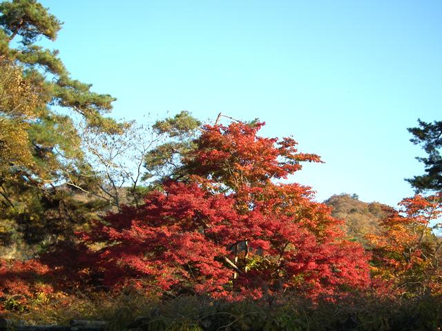 長瀞 月の石もみじ公園の紅葉(5)