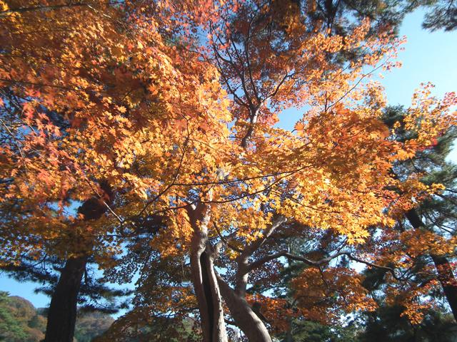 長瀞 月の石もみじ公園の紅葉(9)