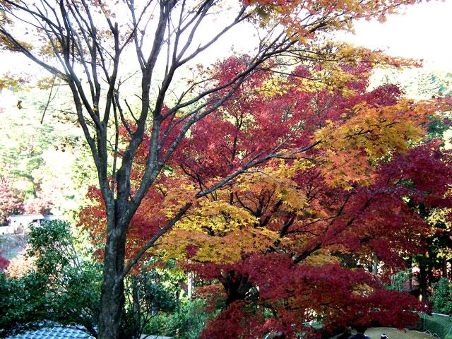 2014修善寺・虹の郷の紅葉(3)