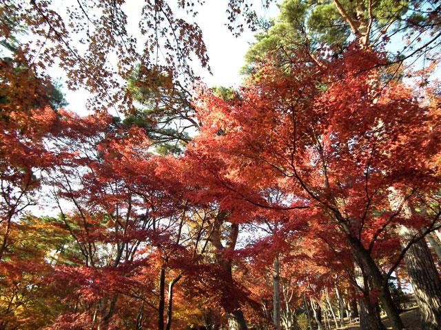 2014修善寺・虹の郷の紅葉(6)