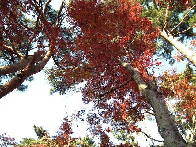 2014修善寺・虹の郷の紅葉(7)