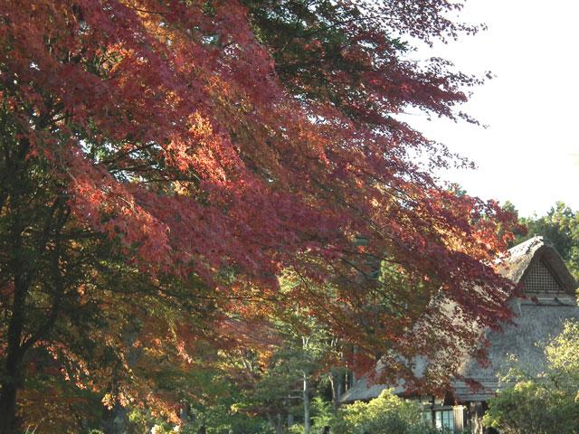 2014修善寺・虹の郷の紅葉(10)