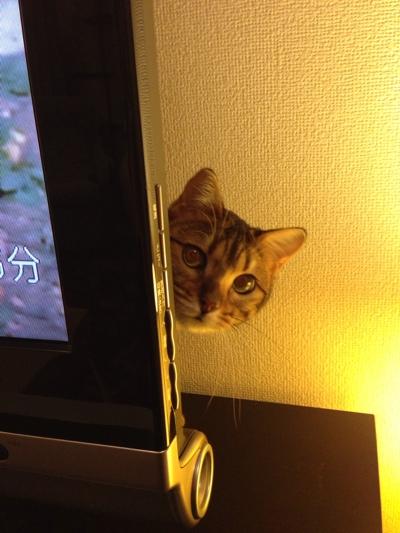 fc2blog_2014012921293346f.jpg