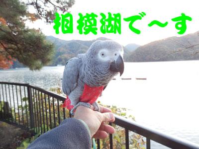 1_相模湖