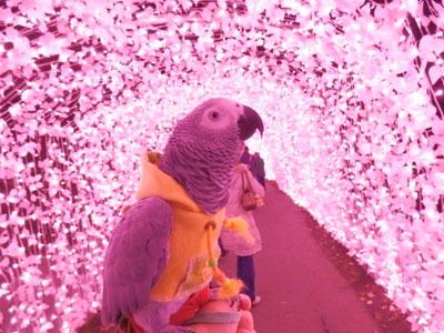 7_ピンクの回廊