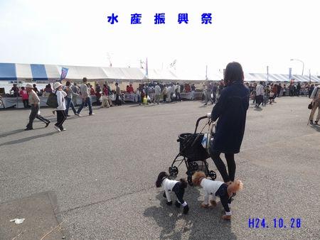 5_20121102091741.jpg