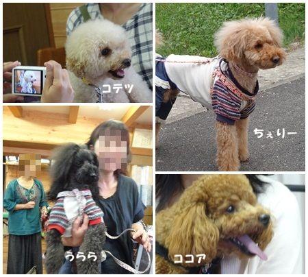 6_20121021141425.jpg