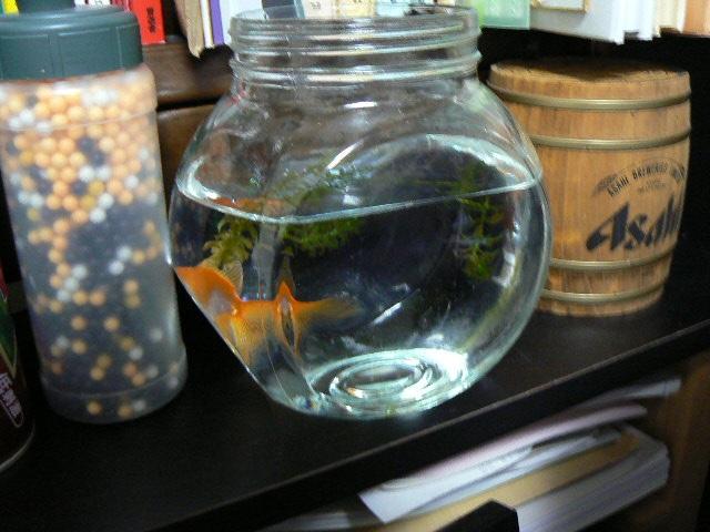 金魚の家アフター