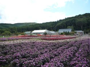 花の都 花P1040495c