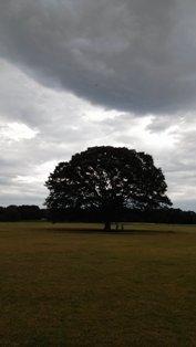 この木 IMG02143c