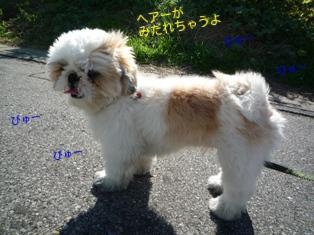 CX_8eGUD0l7zGoM_1351943916_mj.jpg