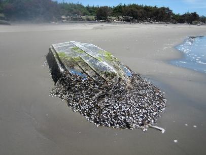 wa-tsunami-boat-2012-06-19.jpg