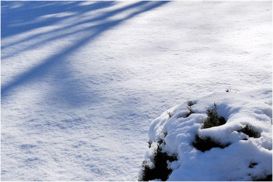 房総の積雪