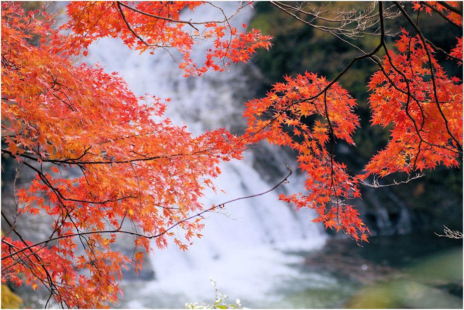 養老渓谷紅葉1