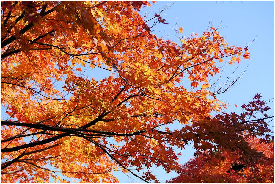 養老渓谷紅葉3