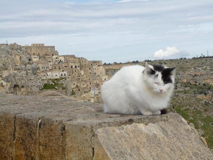 マテーラ猫