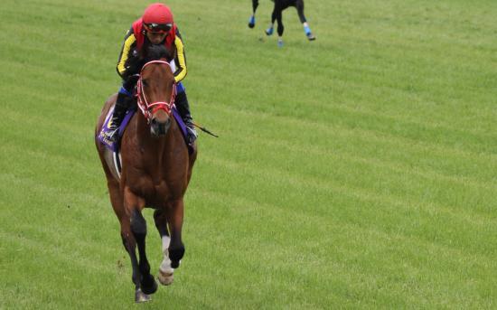 ディープブリランテ 皐月返し馬