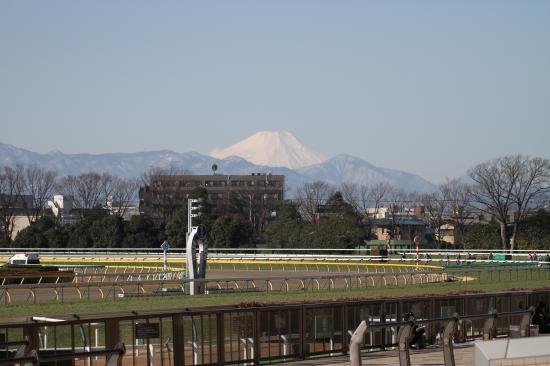東京競馬場と富士山