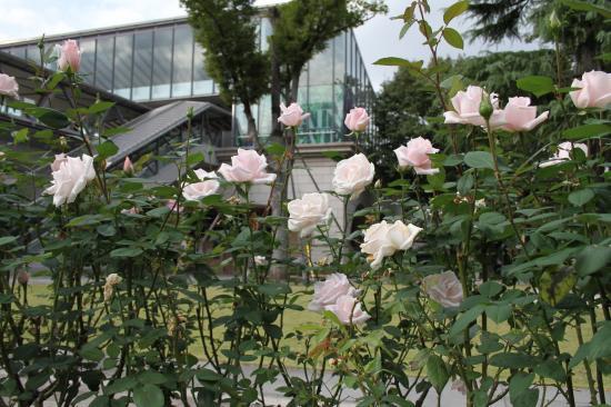 東京競馬場バラ2