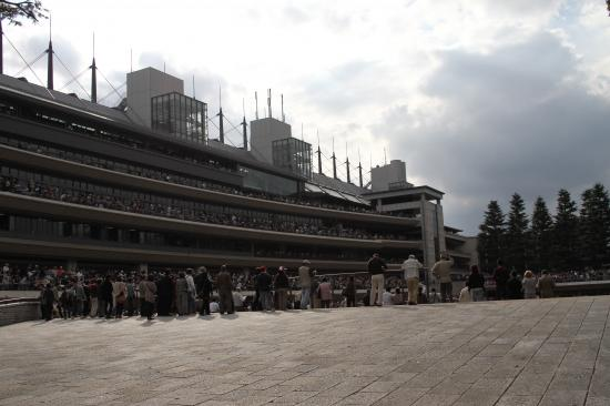 東京競馬場パドック2