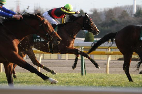 東京新聞杯レース2
