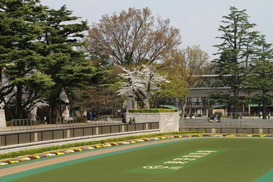 東京競馬場・桜3