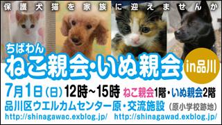 nekoinuoyakai20120701_320x180.jpg
