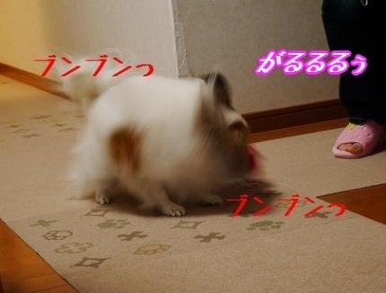 P1060862.jpg