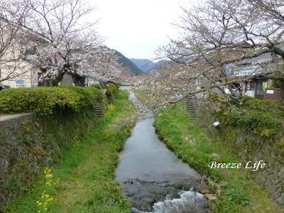itinosakasakura1.jpg
