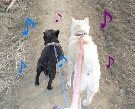 ブブと鈴の散歩