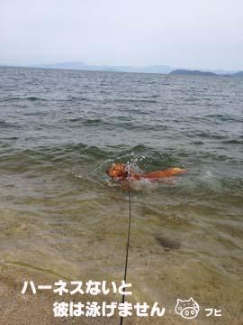 初泳ぎ2012
