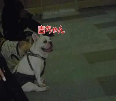 繝溘ル繝輔Ξ繝悶Ν・托シ抵シ托シ狙convert_20121029184339