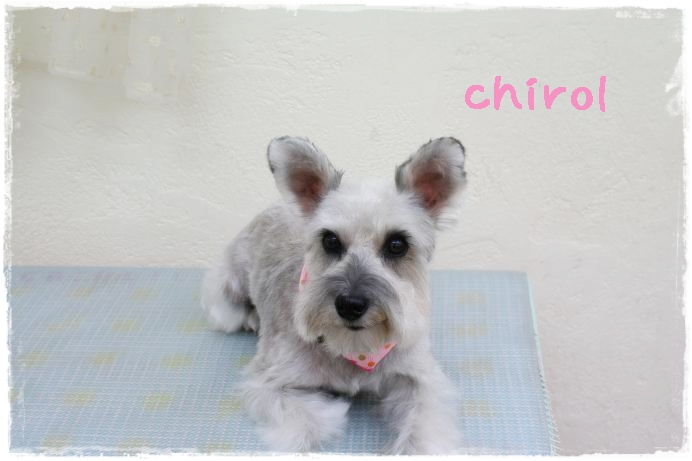 chirol95.jpg