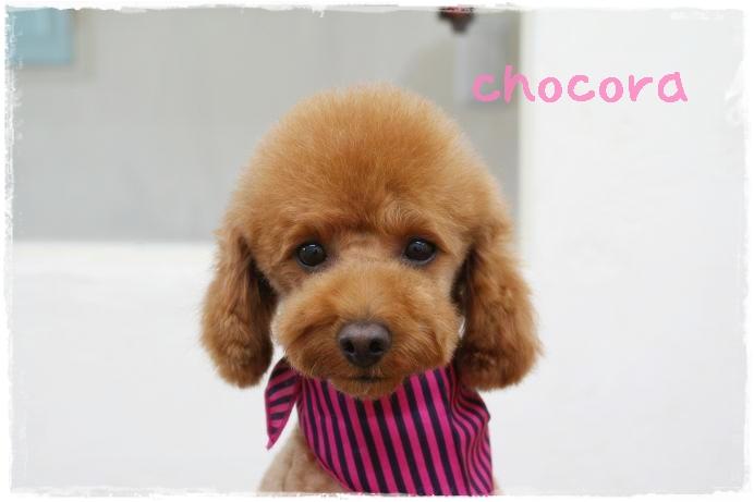chocora84.jpg