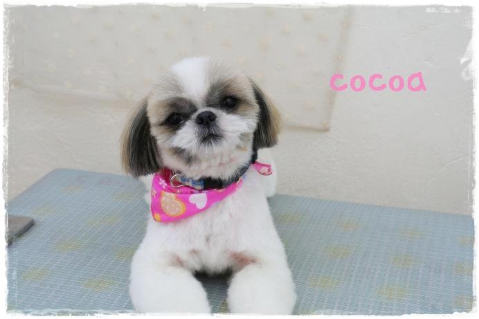 cocoa71.jpg