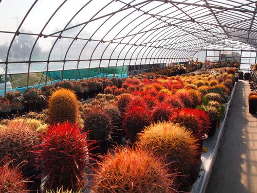 廣仙園2012初秋
