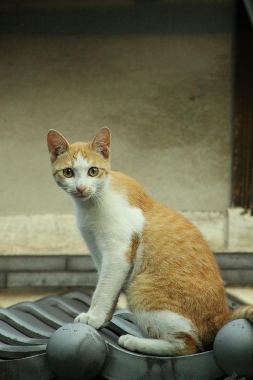 屋根の上のネコ 座り姿