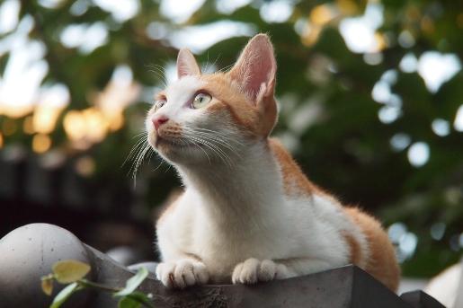屋根の上のネコ みあげる
