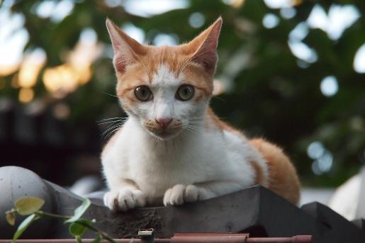 屋根の上のネコ 再び