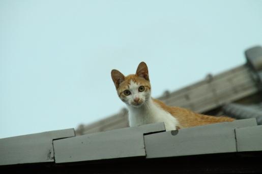 屋根の上のネコ こんにちは