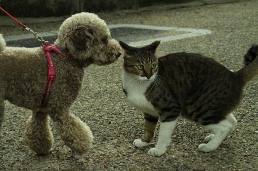 長瀬川 猫 犬