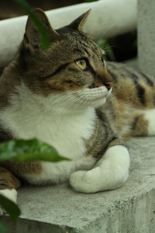 長瀬川 猫 横顔