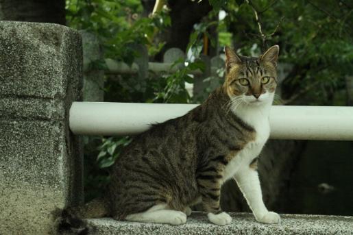 長瀬川 猫 橋