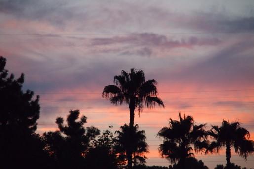 緑地プール夕日
