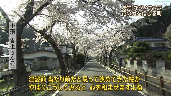 aoyamamegumi_20120501_12.jpg